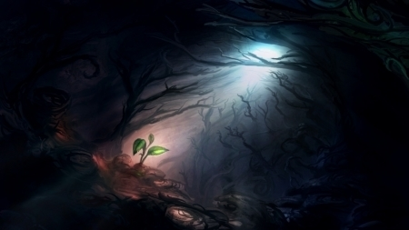 forest and hope image
