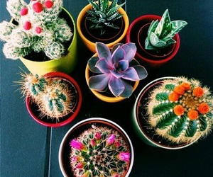 colorful, plants, and theme image