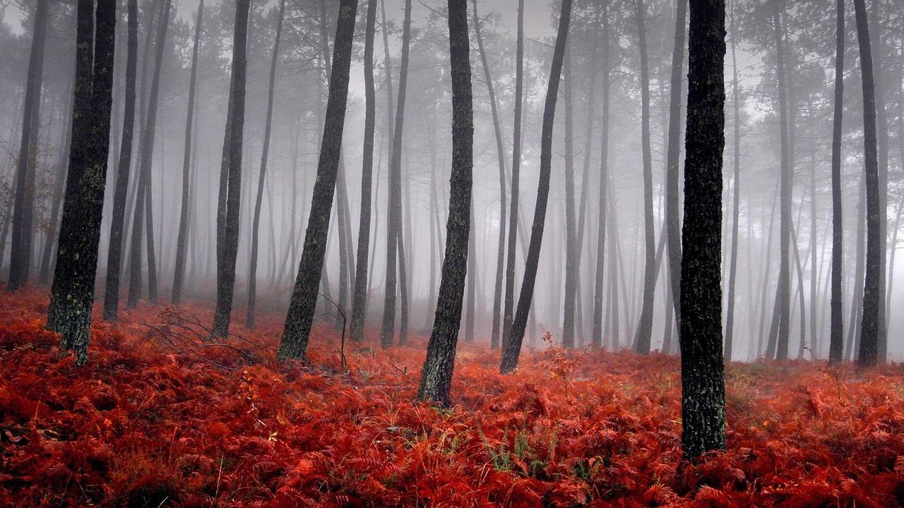 tree, forest, and red image