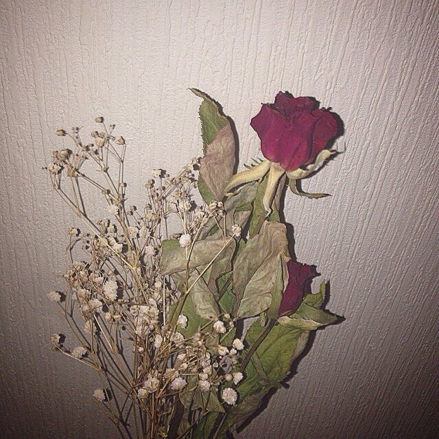 rose and dryflower image