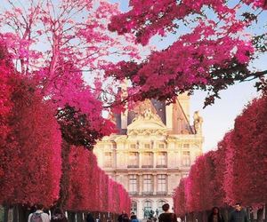 pink, paris, and travel image