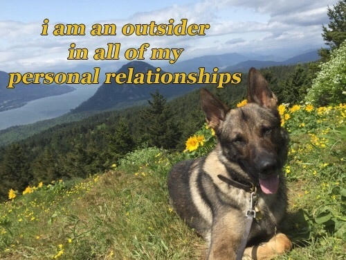 dog, meme, and phrases image