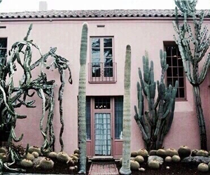 pink, teal, and cactus image