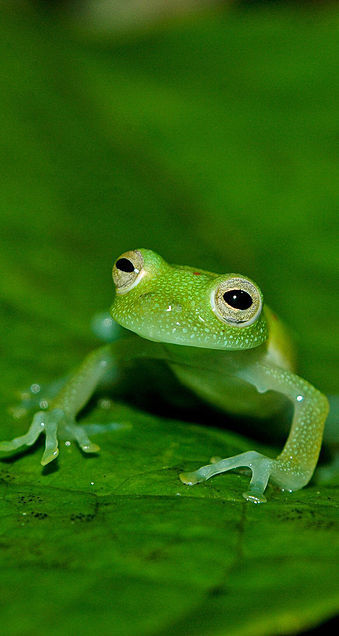 animals, baby, and frog image