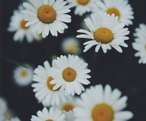 Best, flower, and mylove  image