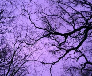 purple, tree, and sky image