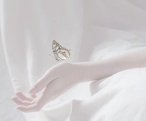butterfly, lovely, and cute image