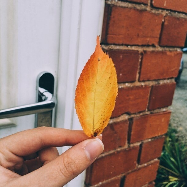 autumn, leaves, and aesthetic image