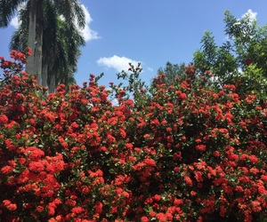 blooming, blue, and bush image