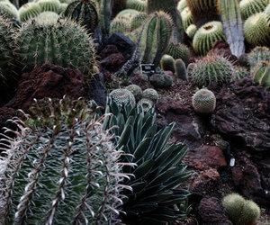 cacti, cactus, and california image