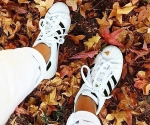 autumn, adidas, and fall image