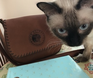 cat, leather, and purse image