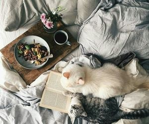 cat, book, and morning image