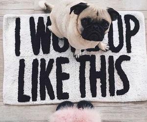 dog, like, and cute image