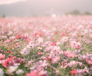 flowers, pink, and field image