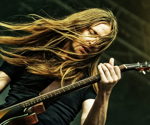 carcass and bill steer image