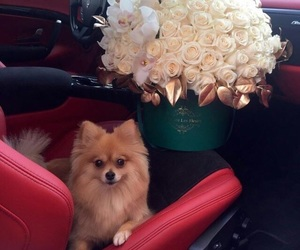 flowers, dog, and luxury image