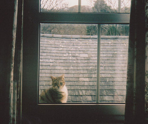 aesthetic, window, and animals image
