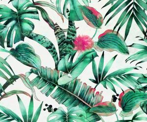 background, banana, and botanical image