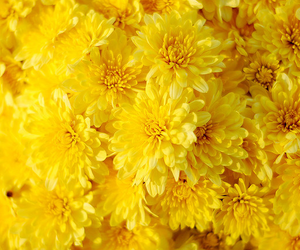 yellow, flowers, and texture image