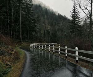 rain, nature, and autumn image