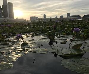 SG, singapore, and sunset image