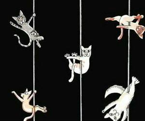 cat, cats, and pole dance image