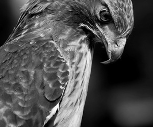 black and white, photography, and bird image