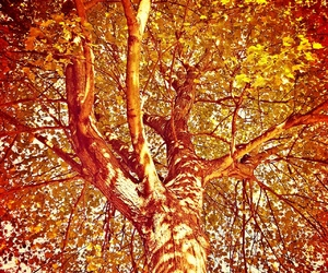 autumn, fading, and leaves image