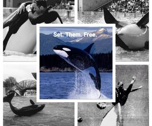 animals, captivity, and dolphin image