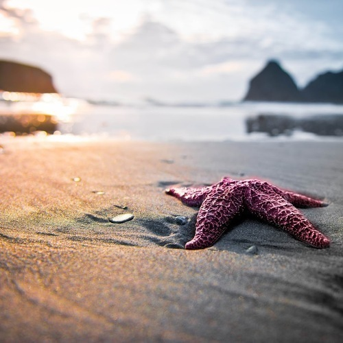 beach, starfish, and sea image