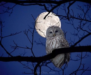 owl, moon, and night image