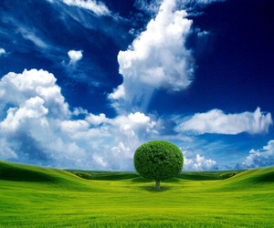 amazing pictures, photography inspiration, and beautiful tree moynhsda image