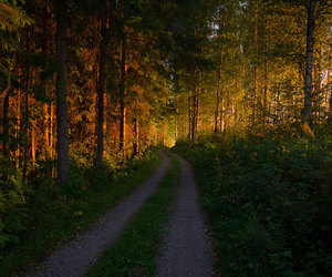 autumn, country life, and dirt road image