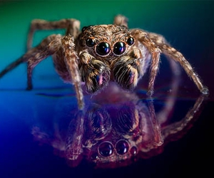 cute and spider image