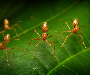 ants, bugs, and dance image