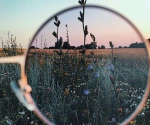 nature, sunglass, and photography image