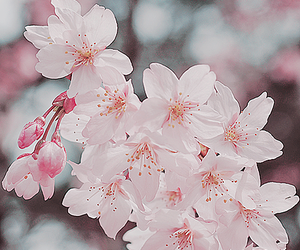 flowers and cherry tree image