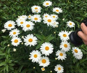 daisies, lens, and petals image