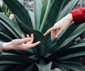 hands and plants image