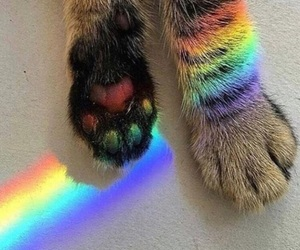 aesthetic, cat, and rainbow image