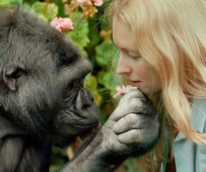 gorilla, love, and all animals image