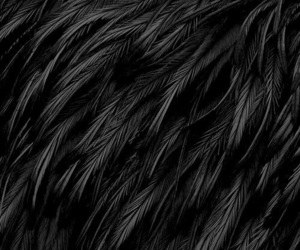 black, feather, and wallpaper image