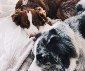 adorable, dogs, and happy image