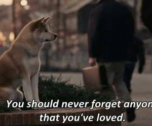 love, dog, and movie image