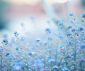 mundo azul image