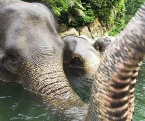 elephant, nature, and water image