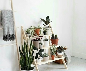 plants, cactus, and decor image