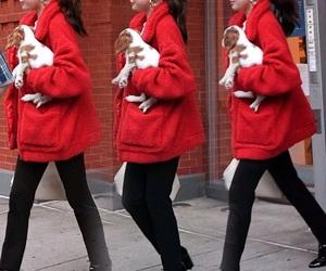 celebrity, charles, and dog image