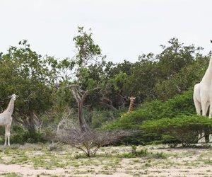 giraffes and still beautiful image